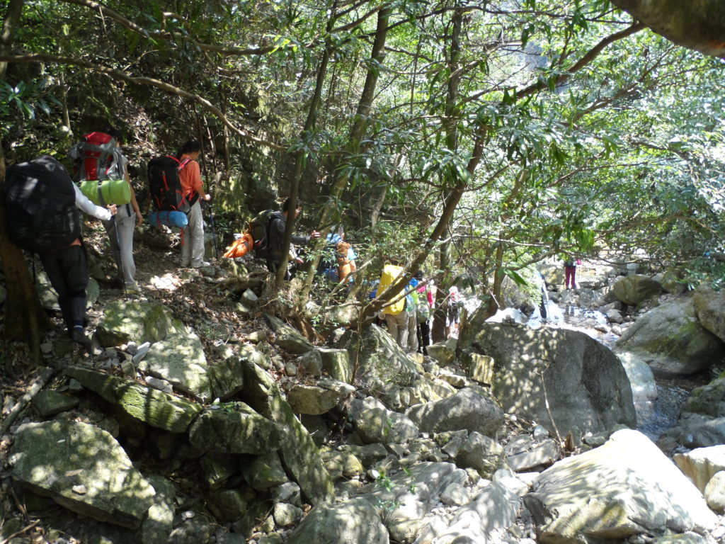 Back to the forest in Chuandiding mountain, North Guangdong