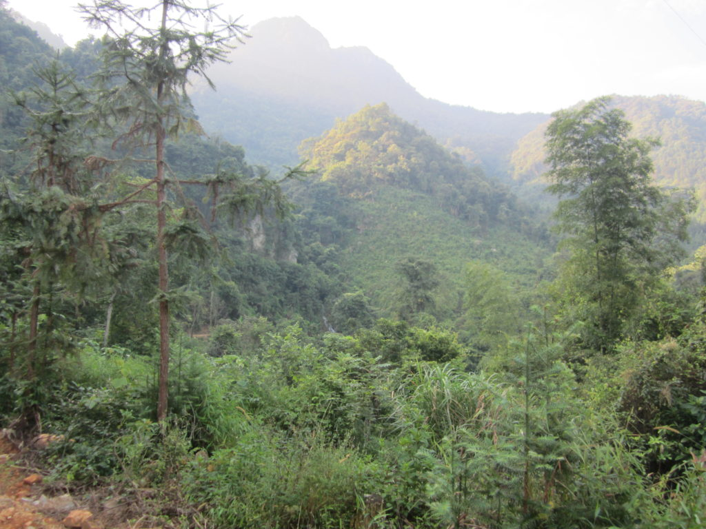 Forest in Chuandiding mountain, North Guangdong