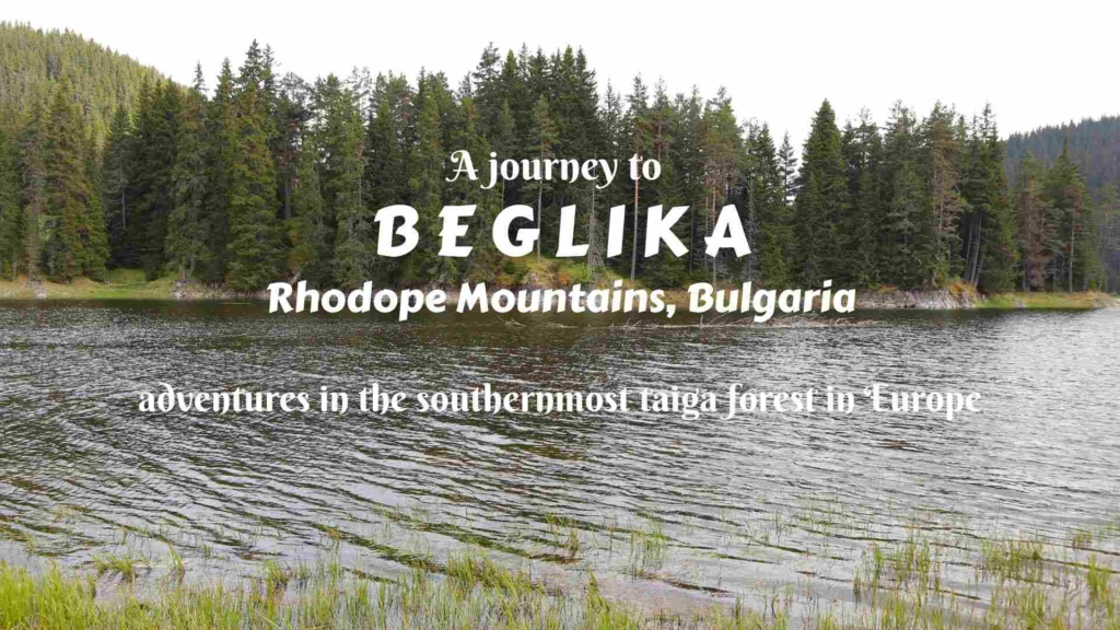 A journey to Beglika in Rhodope Mountains, Bulgaria- adventures in the southernmost taiga forest in Europe