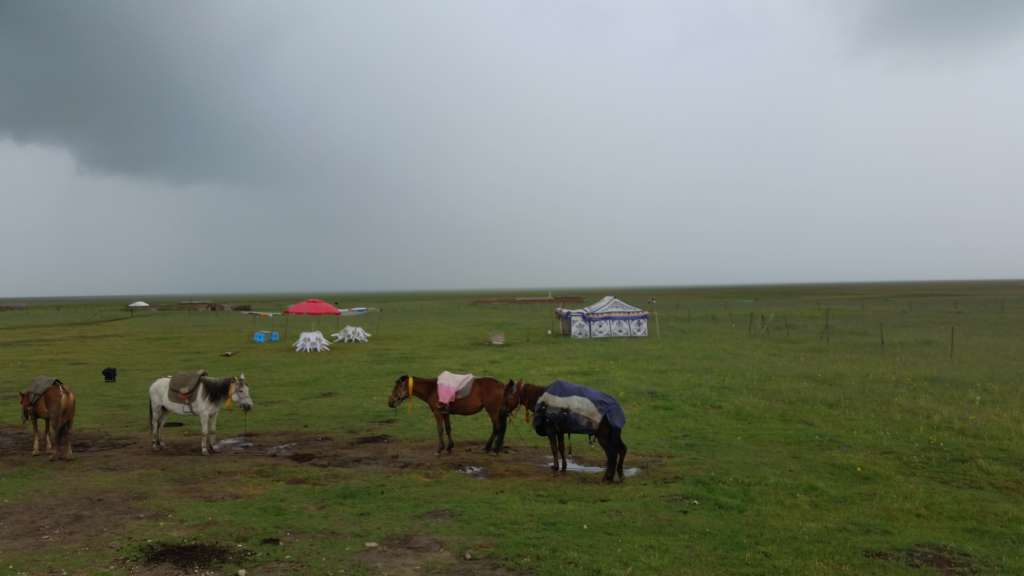 Tibetan nomadic life in Zoige grassland