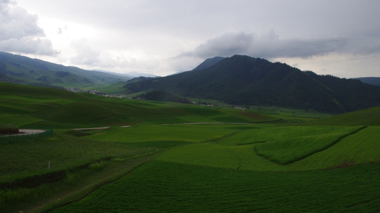 Grasslands on Qilian Mountains