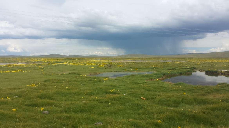 Eastern Tibet, Qinghai, Madoi grassland, rain, summer