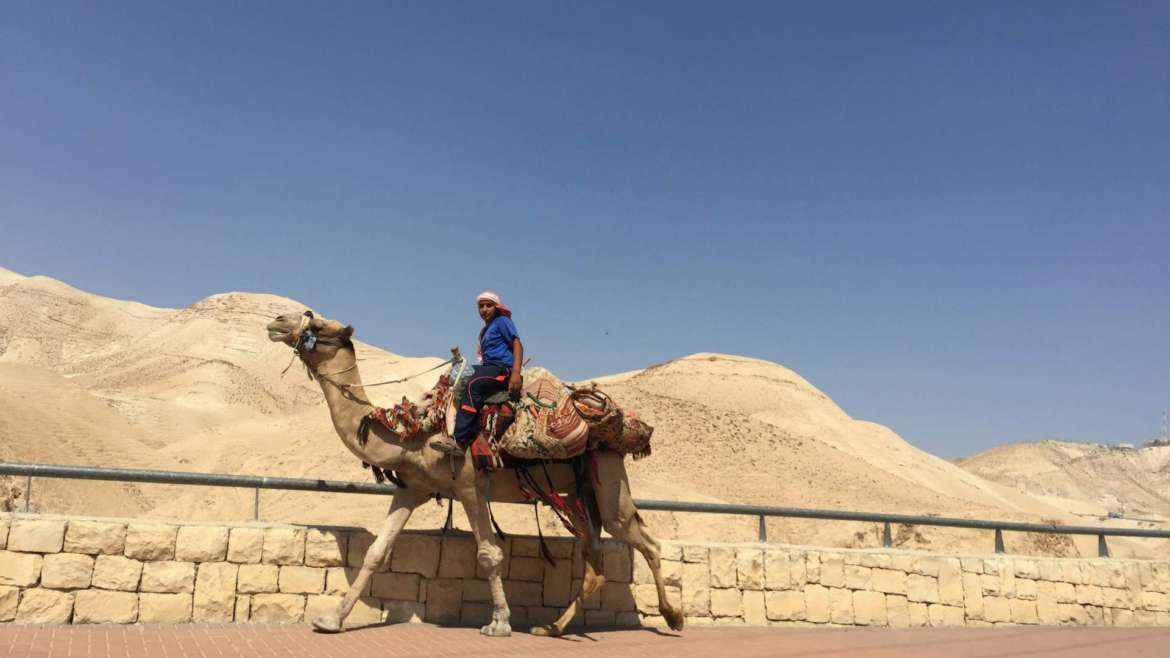 Israel itinerary- a camel with its master, on the way from Jerusalem to Dead Sea, 0 m altitude