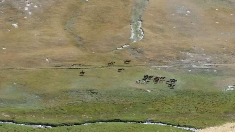 Tash Rabat, Kyrgyzstan, horses on the mountain grassland