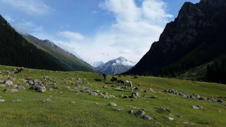 Horses in Altyn Arashan, Kyrgyzstan