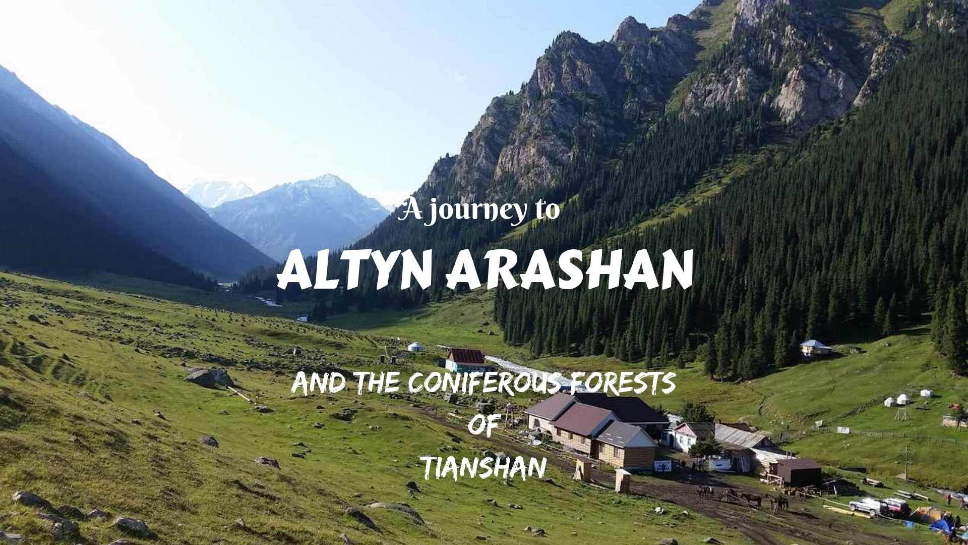 A JOURNEY TO ALTYN ARASHAN AND THE CONIFEROUS FORESTS OF TIANSHAN