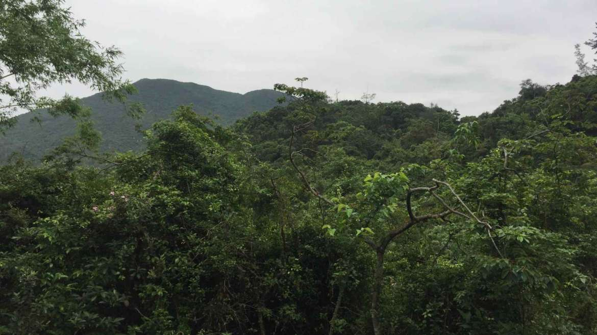 Wild forest in Sai Kung Peninsula- in the wildest parts of Hong Kong