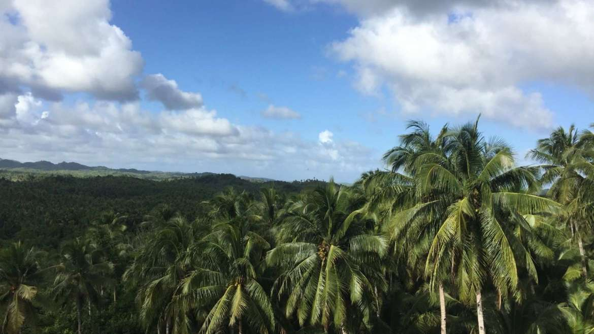 What to do in Siargao- explore the coconut palm forest of the island