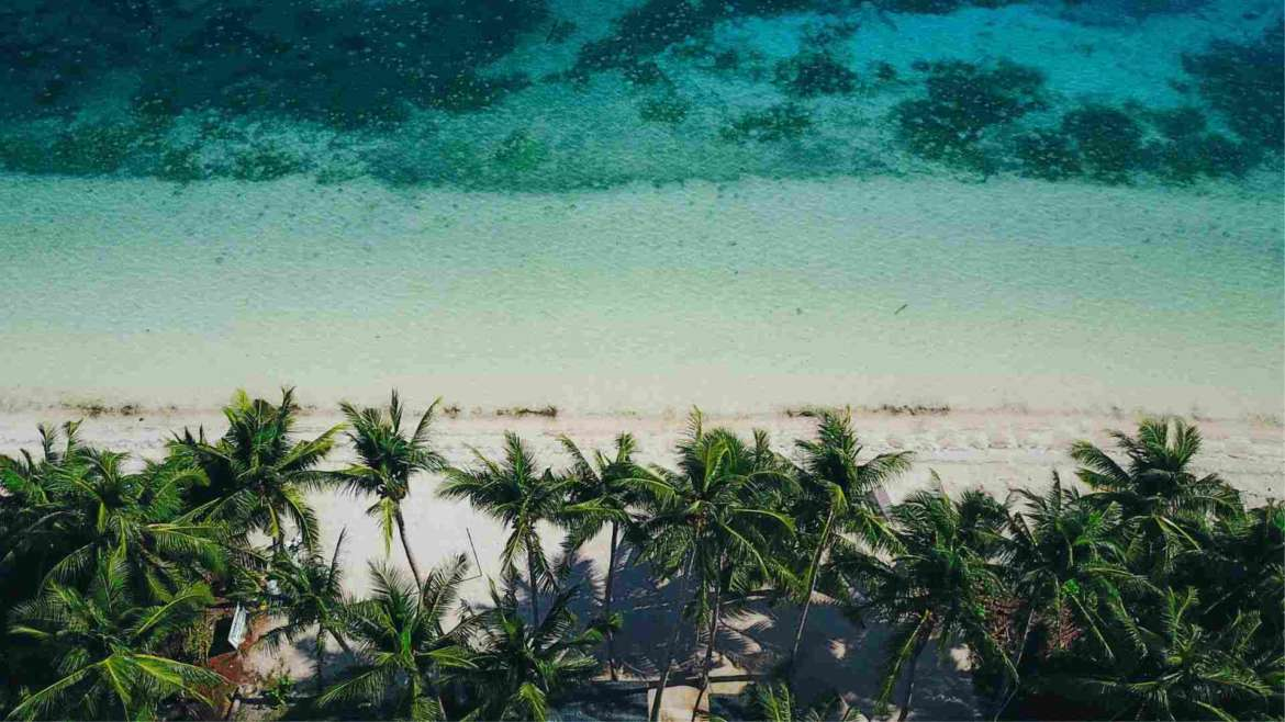 What to do in Siquijor- coconut palm trees and crystal clear water