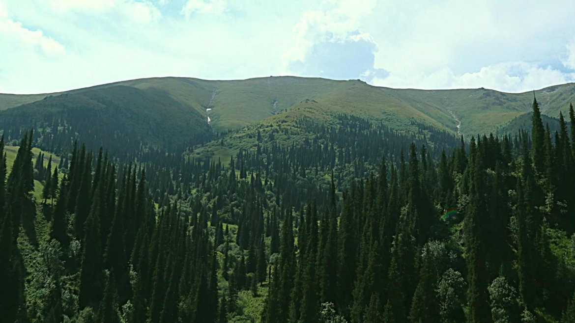 Xinjiang travel- Forest and grasslands along the Du Ku Highway