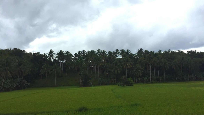 A typical rural landscape of Bohol