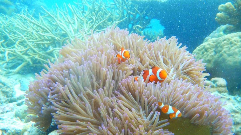 Sulu Sea corals