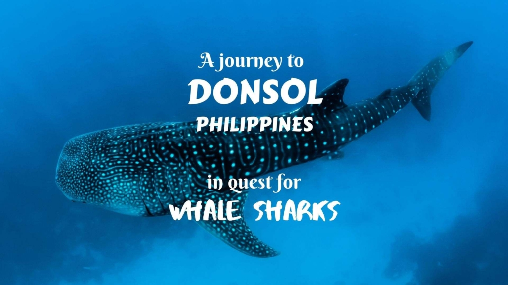 A journey to Donsol, Philippines, in quest for whale sharks