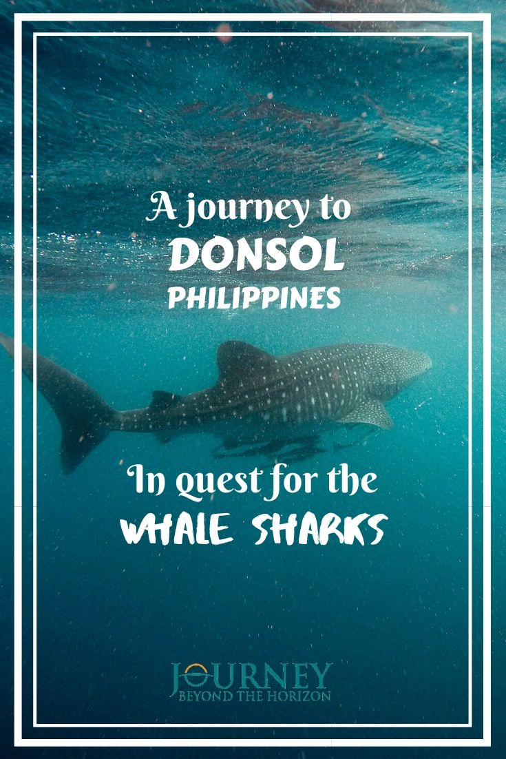 Make a journey to Donsol, Philippines, and join a whale sharks tour!