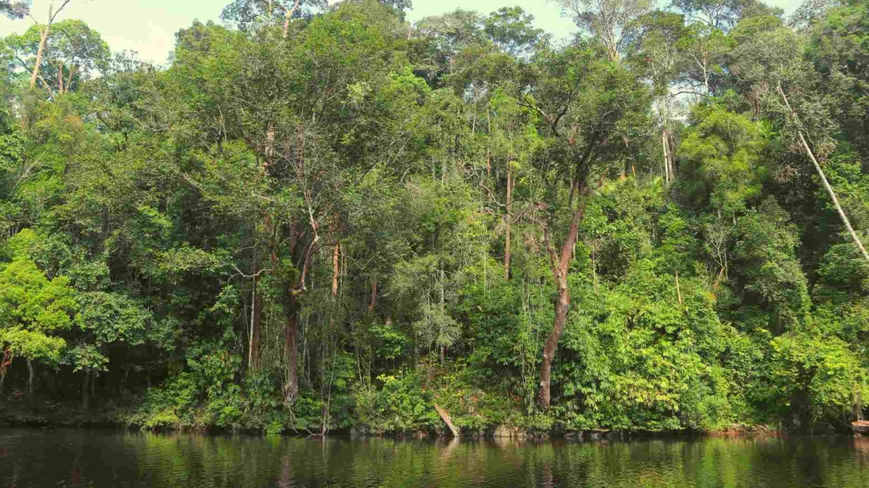 The equatorial rainforest of Taman Negara