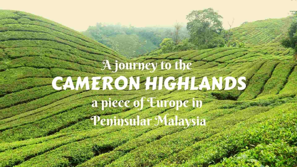 A journey to the Cameron Highlands- a cool piece of Europe in Peninsular Malaysia