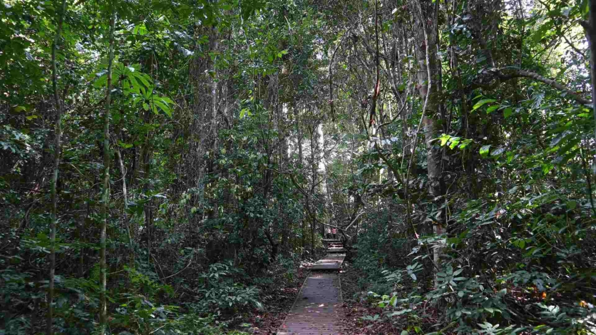On the wooden path to Bukit Teresek