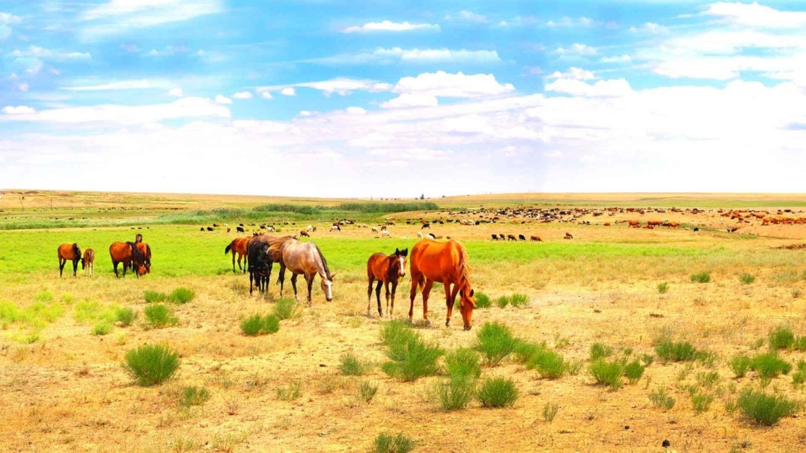 On the steppes of Western Kazakhstan