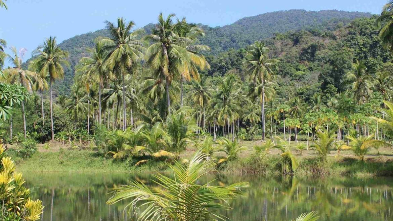 The Equator through Sumatra Island