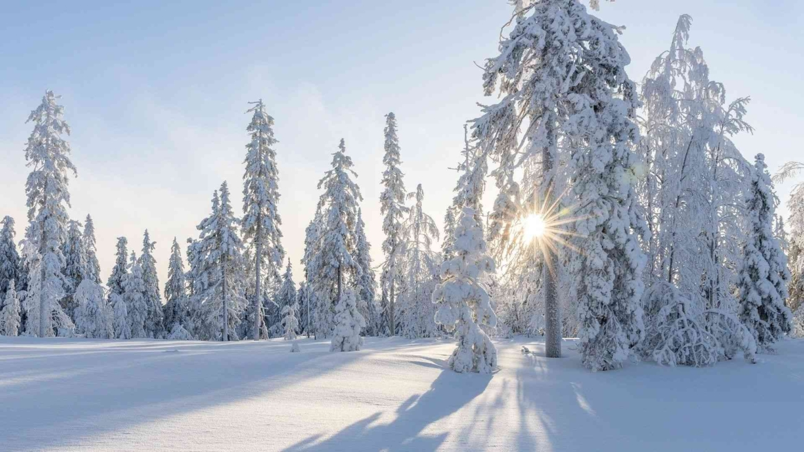 Boreal taiga forest in winter