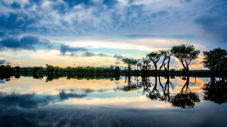 Silent Amazonia