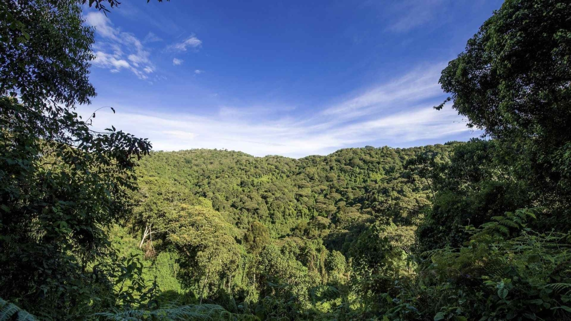 On the Equator, through the rainforests of Africa