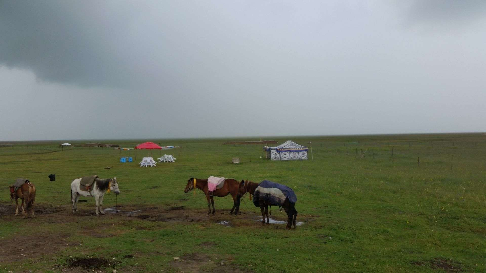 Yurts and horses in Zoige Grassland